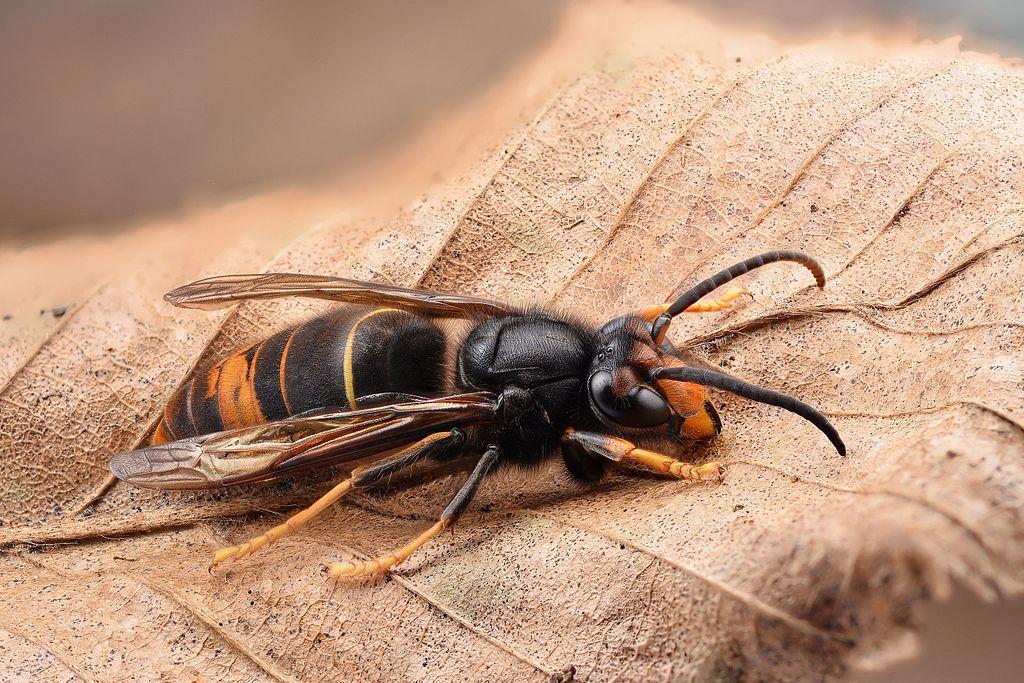 produit contre abeille